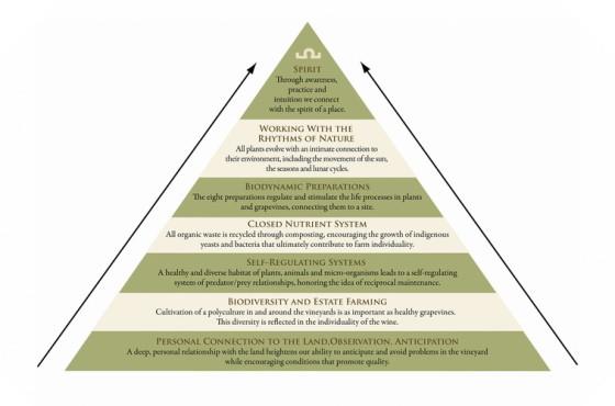 biodynamic-agriculture-biodynamische-landwirtschaft -biodinamicka-poljoprivreda-mother-tincture-urtinktur-teinture-mere-homeopat-ekstrakt-tinktura-biljni-preparati-com-yt1mi-alternativa-izbor