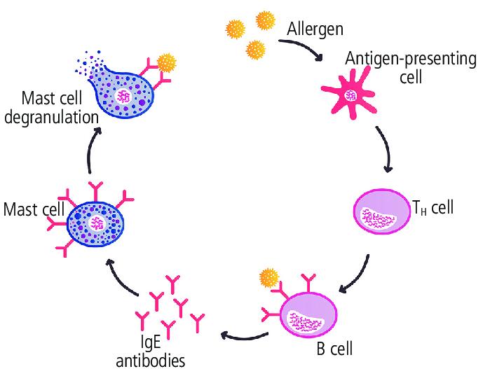 ALERGIJE STOP 6 MIX Kompozitna formula kod alergija MKB-10 T78.4