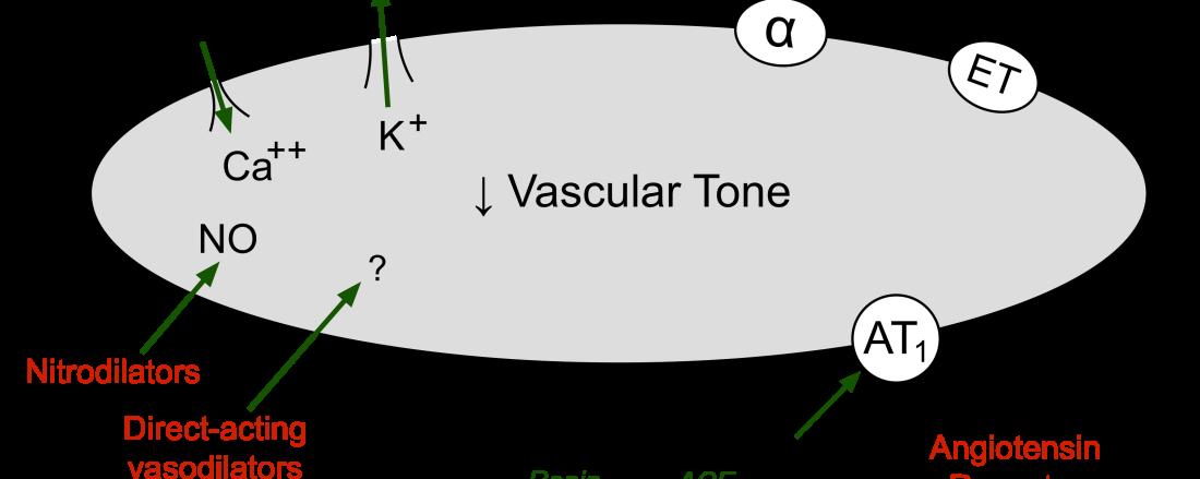 vasodilator drugs