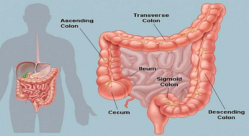 cleansing-colon-colon-hydro-therapie-hidro-kolon-terapija-iscelivanje-zvukom-mother-tincture-urtinktur-teinture-mere-homeopat-ekstrakt-tinktura-biljni-preparati-com-yt1mi-alternativa-prakse