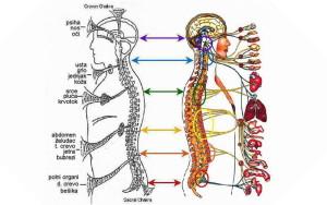 sebiot-segment-bioenergetic-therapy-segmentna-bioenergetska-terapija-mother-tincture-urtinktur-teinture-mere-homeopat-ekstrakt-tinktura-biljni-preparati-com-alternativa-