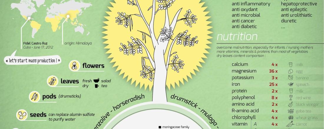 Moringa-information-chart