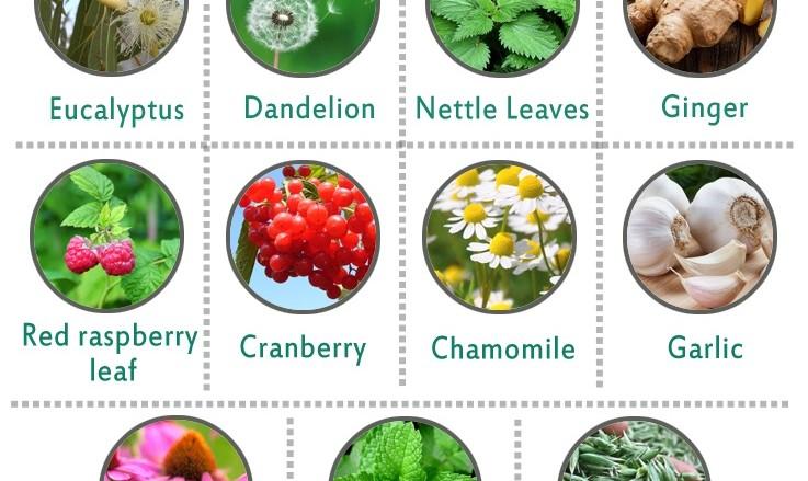 11 bezbednih biljaka u trudnoći